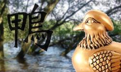 Kachnička mandarinská symbol lásky